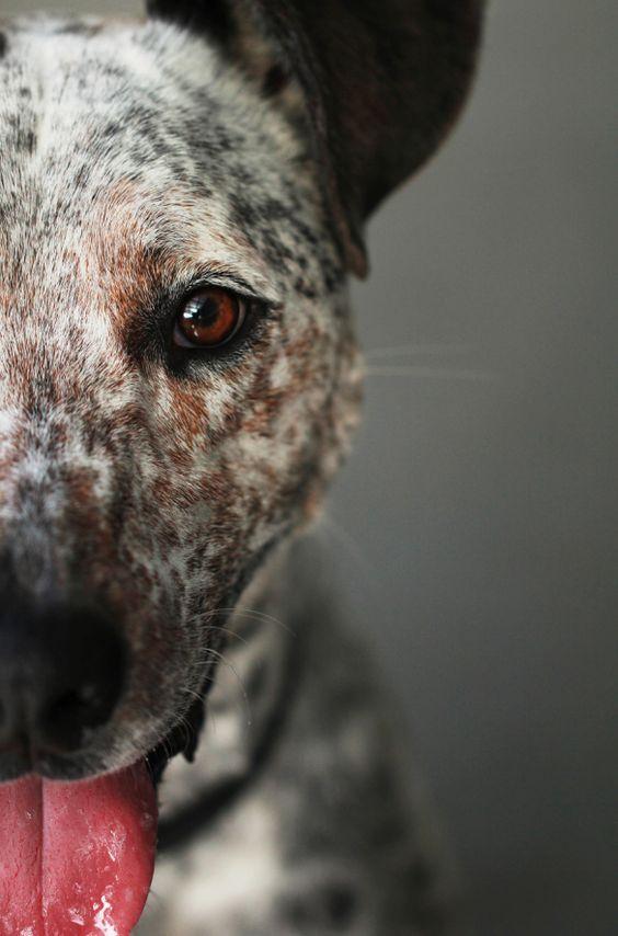 Hunderassen Terrier Bilder - Hunderassen Terrier Bilder