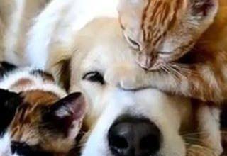Hunderassen Und Bilder Kostenlos Herunterladen 320x220 - Hunderassen Und Bilder Kostenlos Herunterladen