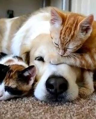 Hunderassen Und Bilder Kostenlos Herunterladen - Hunderassen Und Bilder Kostenlos Herunterladen