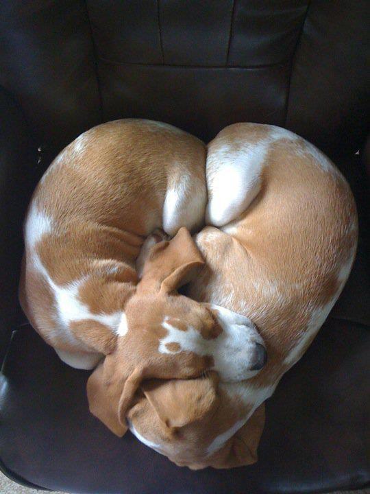 Hunderassen Und Charaktereigenschaften - Hunderassen Und Charaktereigenschaften