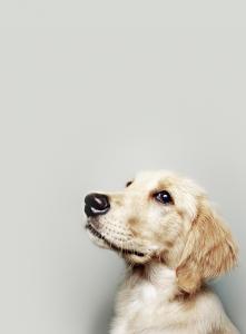 Hunderassen Und Ihre Charaktereigenschaften 221x300 - Hunderassen Und Ihre Charaktereigenschaften