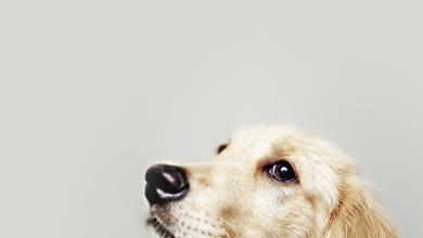 Hunderassen Und Ihre Charaktereigenschaften 390x220 - Hunderassen Und Ihre Charaktereigenschaften