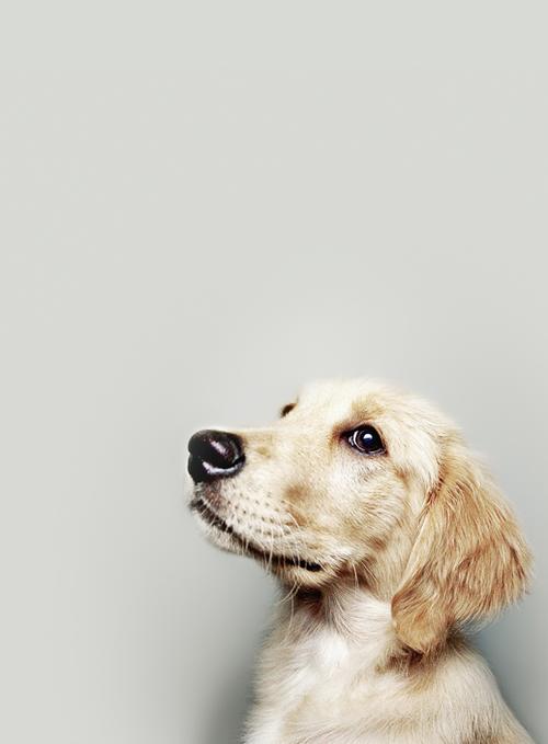 Hunderassen Und Ihre Charaktereigenschaften - Hunderassen Und Ihre Charaktereigenschaften