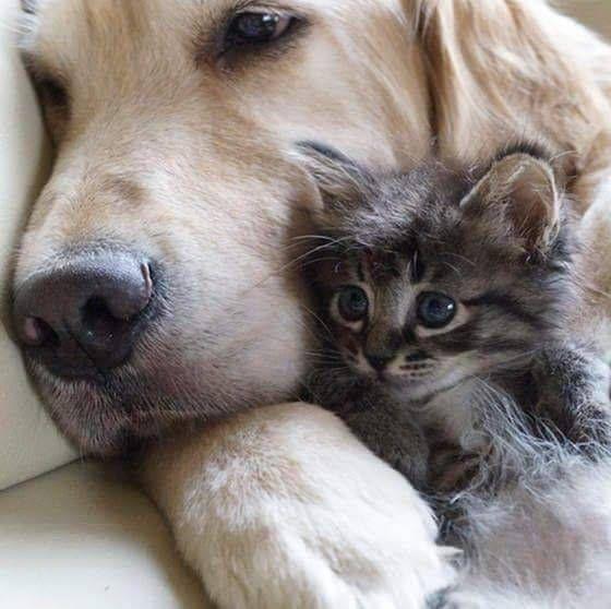 Hunderassen Und Ihre Merkmale - Hunderassen Und Ihre Merkmale