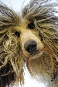 Hunderassen Und Ihre Wesen 200x300 - Hunderassen Und Ihre Wesen