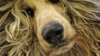 Hunderassen Und Ihre Wesen 390x220 - Hunderassen Und Ihre Wesen