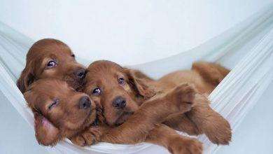 Hunderassen Welpen Bilder Für Facebook 390x220 - Hunderassen Welpen Bilder Für Facebook