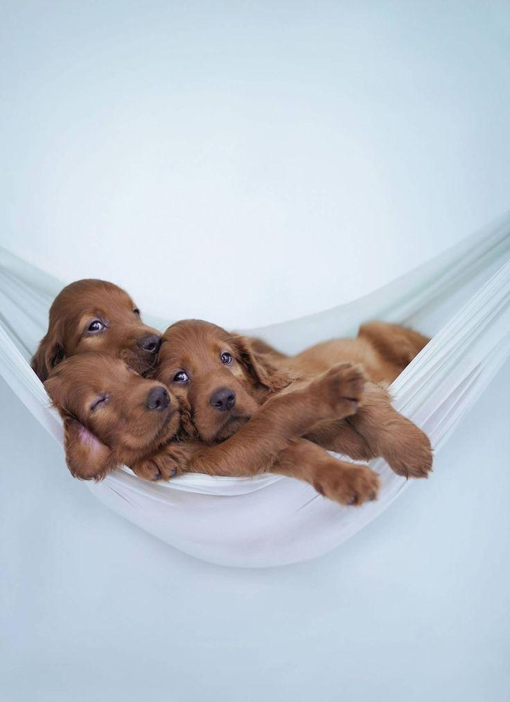 Hunderassen Welpen Bilder Für Facebook - Hunderassen Welpen Bilder Für Facebook