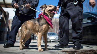 Hunderassen Welpen Mit Bild 390x220 - Hunderassen Welpen Mit Bild