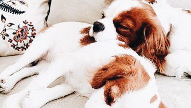 Hunderassen Wie Viele Gibt Es 390x220 - Hunderassen Wie Viele Gibt Es