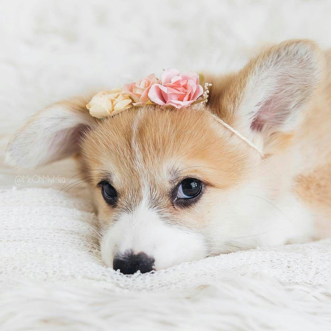Hundeseite De Hunderassen - Hundeseite De Hunderassen