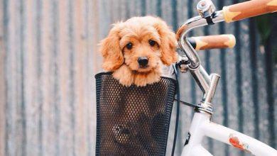 Hundeskelett Bilder 390x220 - Hundeskelett Bilder