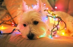 Hundeskelett Bilder Für Facebook 300x193 - Hundeskelett Bilder Für Facebook
