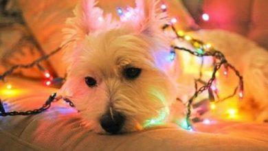 Hundeskelett Bilder Für Facebook 390x220 - Hundeskelett Bilder Für Facebook