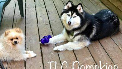 Hundeskelett Bilder Für Whatsapp 390x220 - Hundeskelett Bilder Für Whatsapp