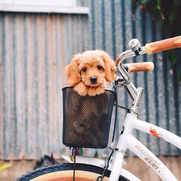 Hundeskelett Bilder - Hundeskelett Bilder