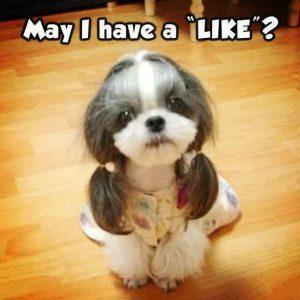 Hundespuren Bilder Kostenlos Herunterladen 300x300 - Hundespuren Bilder Kostenlos Herunterladen