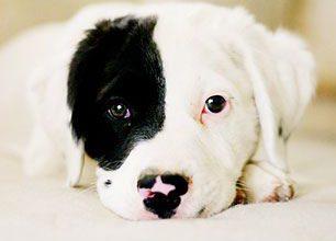 Hundewelpen 306x220 - Hundewelpen