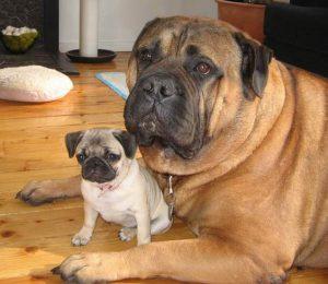 Hundewelpen Bilder Kostenlos Herunterladen 300x260 - Hundewelpen Bilder Kostenlos Herunterladen