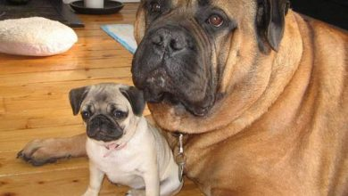 Hundewelpen Bilder Kostenlos Herunterladen 390x220 - Hundewelpen Bilder Kostenlos Herunterladen