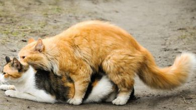 Hundewelpen Rassen Bilder 390x220 - Hundewelpen Rassen Bilder