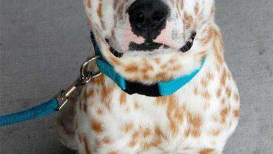 Hundewelpen Rassen Bilder Für Facebook 390x220 - Hundewelpen Rassen Bilder Für Facebook