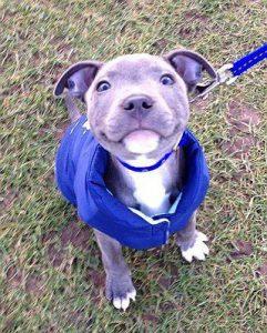 Hundewelpen Rassen Bilder Für Whatsapp 241x300 - Hundewelpen Rassen Bilder Für Whatsapp