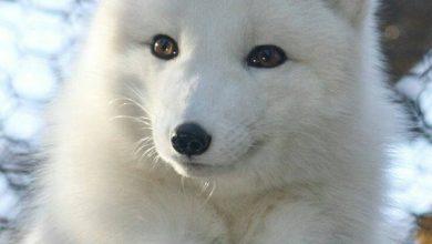 Hundewelpen Verschiedene Rassen 390x220 - Hundewelpen Verschiedene Rassen