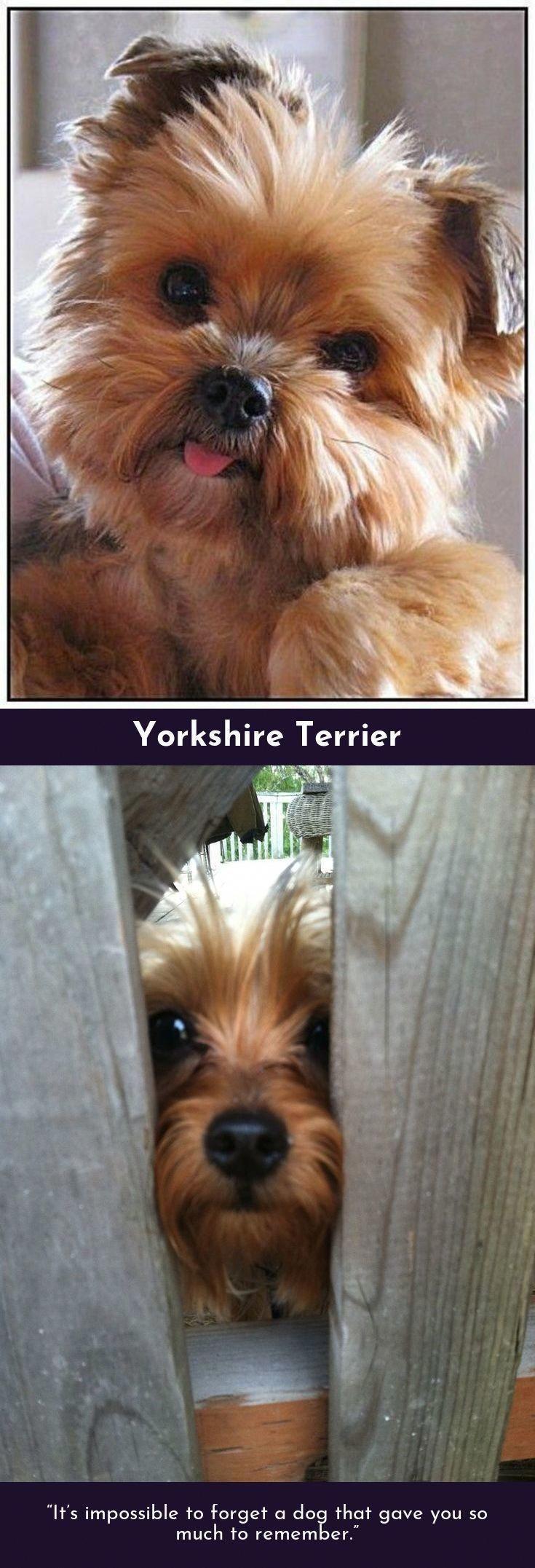 Informationen Über Hunderassen - Informationen Über Hunderassen