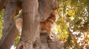 Jagdhunde Bilder - Jagdhunde Bilder