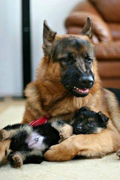 Kampfhunde Liste Mit Bild - Kampfhunde Liste Mit Bild