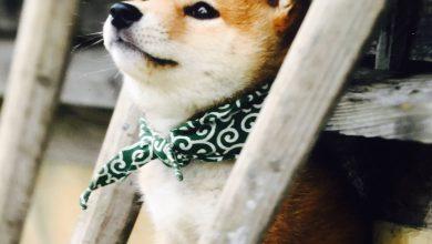 Kampfhunde Rassen Übersicht Bilder Für Facebook 390x220 - Kampfhunde Rassen Übersicht Bilder Für Facebook