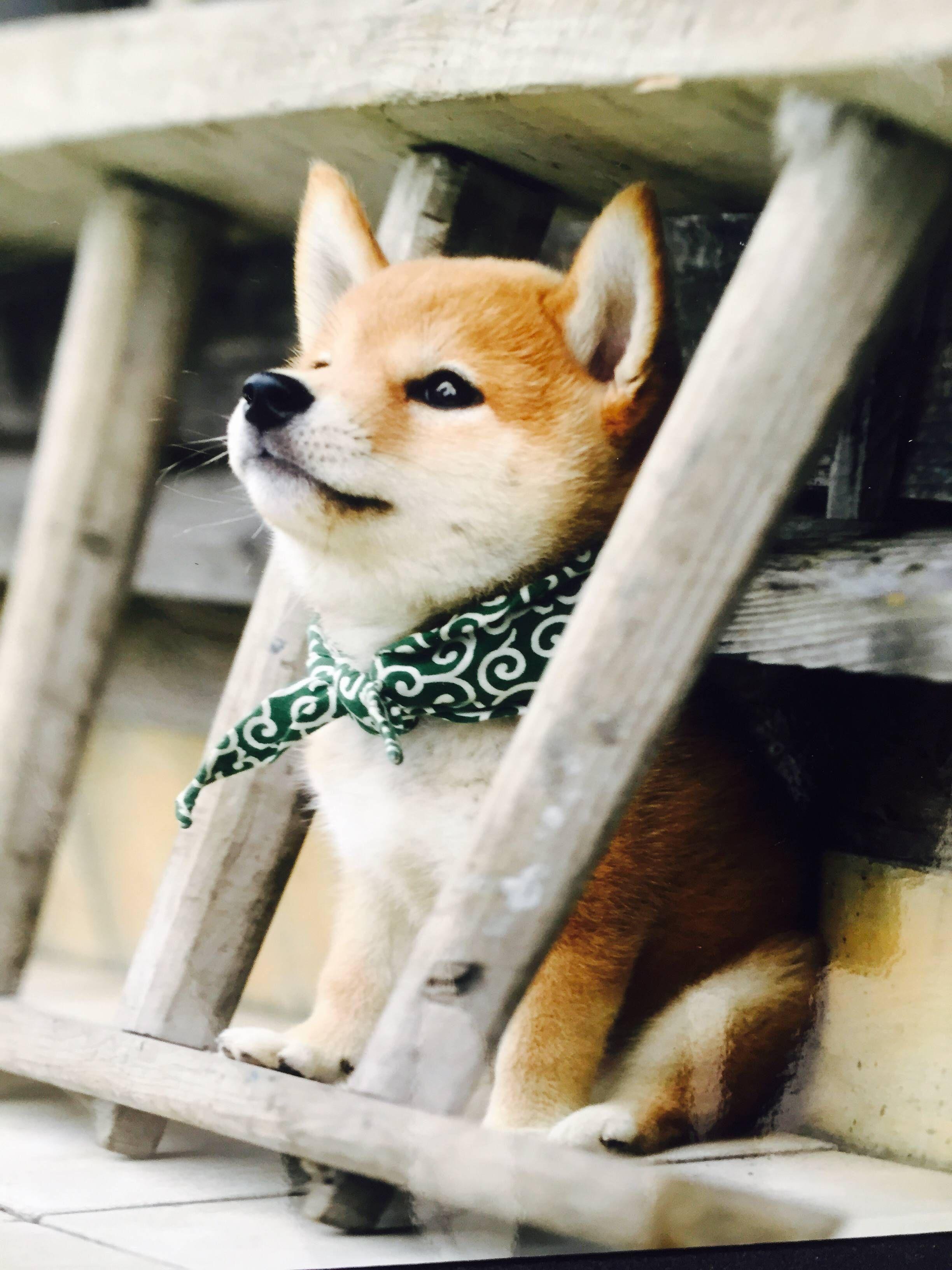 Kampfhunde Rassen Übersicht Bilder Für Facebook - Kampfhunde Rassen Übersicht Bilder Für Facebook