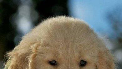 Kampfhunde Rassen Übersicht Bilder Für Whatsapp 390x220 - Kampfhunde Rassen Übersicht Bilder Für Whatsapp