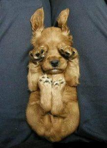Kampfhunde Rassen Übersicht Bilder Kostenlos Herunterladen 218x300 - Kampfhunde Rassen Übersicht Bilder Kostenlos Herunterladen