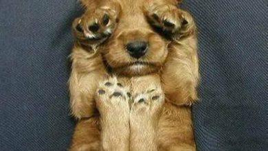 Kampfhunde Rassen Übersicht Bilder Kostenlos Herunterladen 390x220 - Kampfhunde Rassen Übersicht Bilder Kostenlos Herunterladen