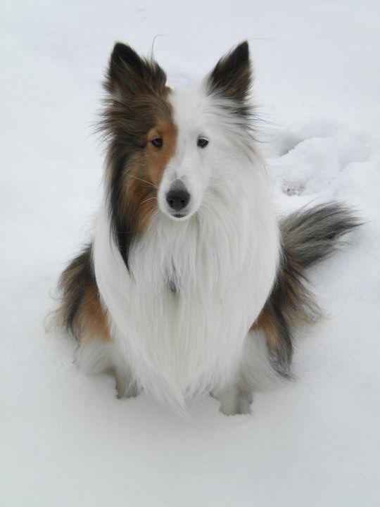 Kampfhunde Rassen Übersicht - Kampfhunde Rassen Übersicht