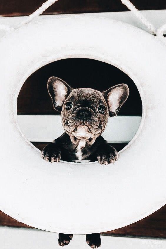Kampfhunderassen Bilder Für Facebook - Kampfhunderassen Bilder Für Facebook