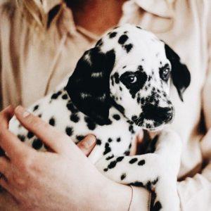 Kleinbleibende Hunderassen Mit Bild 300x300 - Kleinbleibende Hunderassen Mit Bild