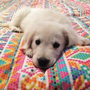 Kleine Bis Mittelgroße Hunderassen Mit Bild 300x300 - Kleine Bis Mittelgroße Hunderassen Mit Bild