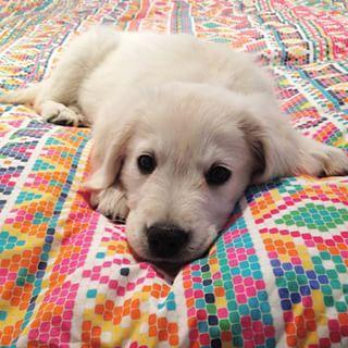 Kleine Bis Mittelgroße Hunderassen Mit Bild - Kleine Bis Mittelgroße Hunderassen Mit Bild