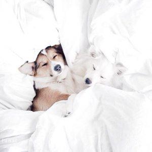 Kleine Chinesische Hunderassen 300x300 - Kleine Chinesische Hunderassen