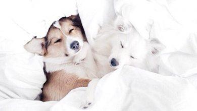 Kleine Chinesische Hunderassen 390x220 - Kleine Chinesische Hunderassen