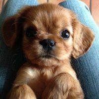 Kleine Hunde Fotos - Kleine Hunde Fotos
