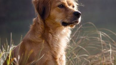 Kleine Hunde Mit Bild 390x220 - Kleine Hunde Mit Bild