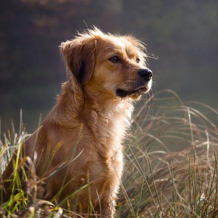 Kleine Hunde Mit Bild - Kleine Hunde Mit Bild