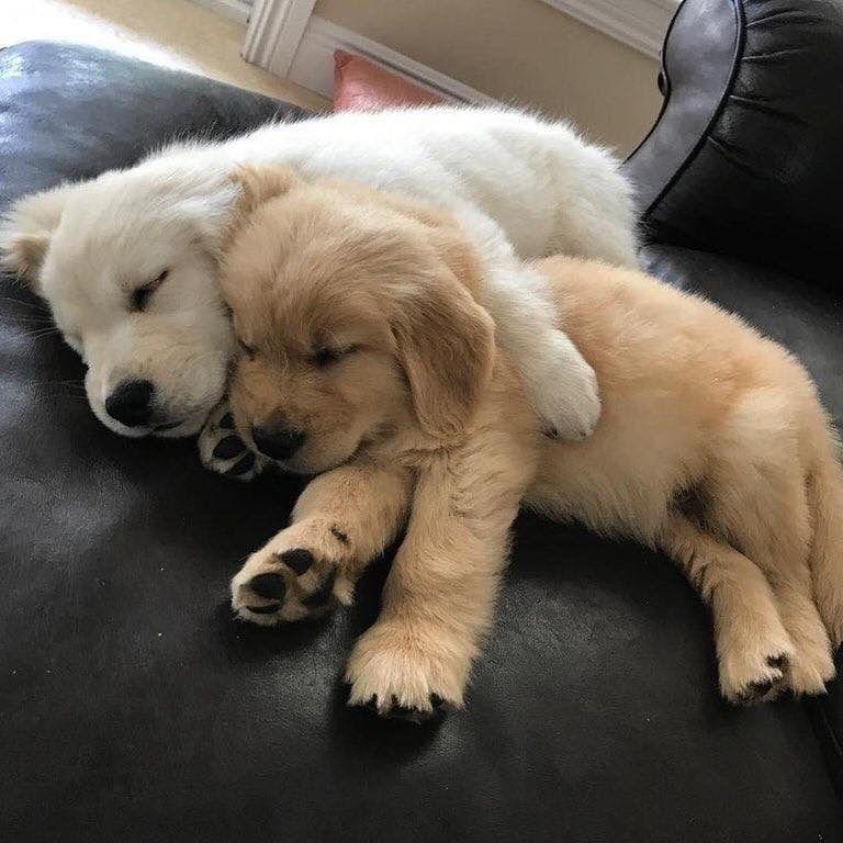 Kleine Hunde - Kleine Hunde