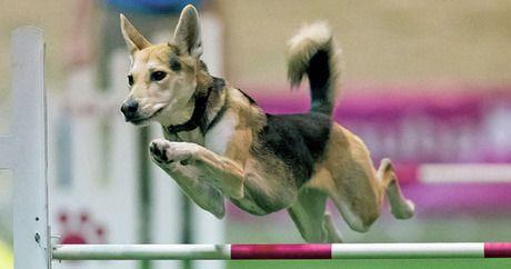 Kleine Hunderassen Übersicht Mit Bild - Kleine Hunderassen Übersicht Mit Bild