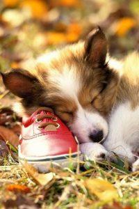 Kleine Hunderassen Arten 200x300 - Kleine Hunderassen Arten