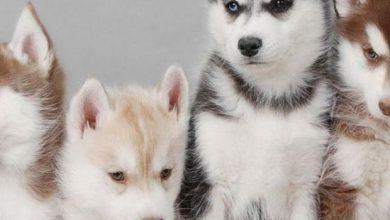 Kleine Hunderassen Bilder 390x220 - Kleine Hunderassen Bilder
